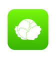 cabbage icon digital green vector image vector image