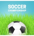 Football in green grass vector image vector image
