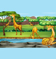 scene with giraffes at open zoo vector image vector image