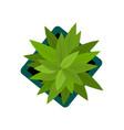 top view plants easy copy paste in your landscape vector image vector image