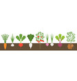 vegetable with root in soil texture flat design vector image
