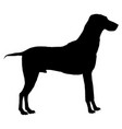dog black icon vector image vector image