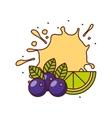 fresh fruit design vector image