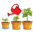 isolated picture potted plants vector image