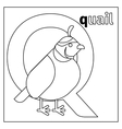 Quail letter Q coloring page vector image