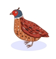 a bird California Quail vector image