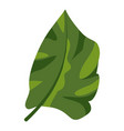 botanical tropical leaf icon cartoon style vector image vector image