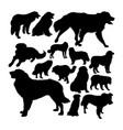 estrela mountain dog silhouettes vector image vector image
