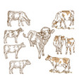 hand drawn farm animals milk cow cattle bull vector image
