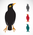 Myna bird vector image