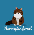 norwegian forest cute cat animal vector image vector image