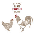 engraved chicken in sketch style vector image vector image