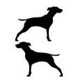 hunter dog or gundog icon black color flat style vector image
