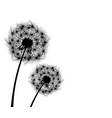 dandelion plant 1 vector image