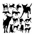formosan mountain dog silhouettes vector image vector image