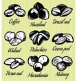 set of symbols patterns different seeds nuts vector image