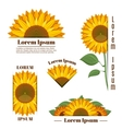 Sunflower banners and yellow sun flower vector image vector image