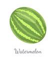 watermelon citron melon berry ripe tropical fruit vector image