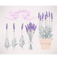 Bouquet of lavender vector image vector image
