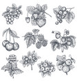 collection hand drawn sketched berries vector image vector image