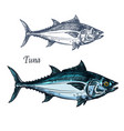 tuna fish isolated sketch icon vector image vector image