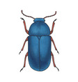bug blue hand drawn insect detailed vector image vector image