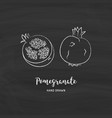 pomegranate fruit drawing hand drawn garnet vector image