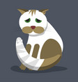 a wounded homeless cat cat with a bandaged tail vector image vector image