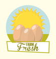 eggs fresh vector image vector image