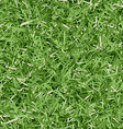 Grass Texture vector image vector image