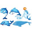 Playful dolphins vector image vector image