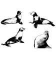 sea lion realistic sketch set vector image