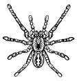 zentangle stylized halloween spider sketch vector image vector image