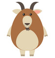 brown goat on white background vector image vector image