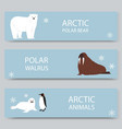 arctic animals and north pole cartoon banners set vector image vector image