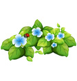 Blue flower and ladybug vector image