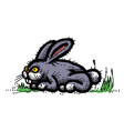 cartoon image of rabbit vector image