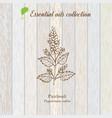 patchouli essential oil label aromatic plant