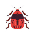 red bug soldier insect top view vector image