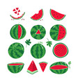 ripe red watermelons whole and slices of vector image