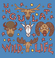 wild life poster vector image