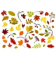 Autumnal leaves berries and herbs vector image