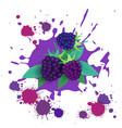 blackberry fruit logo watercolor splash design vector image