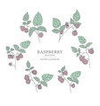 Hand drawn raspberry branches