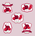 the beet vector image