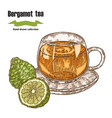 bergamot fruits and cup of tea isolated on white vector image