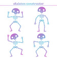 cute rainbow human skeleton constructor for vector image