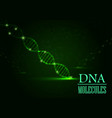 Dna concept on green light background vector image