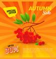 rowan autumn sale vector image vector image