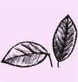 citrus leaves vector image